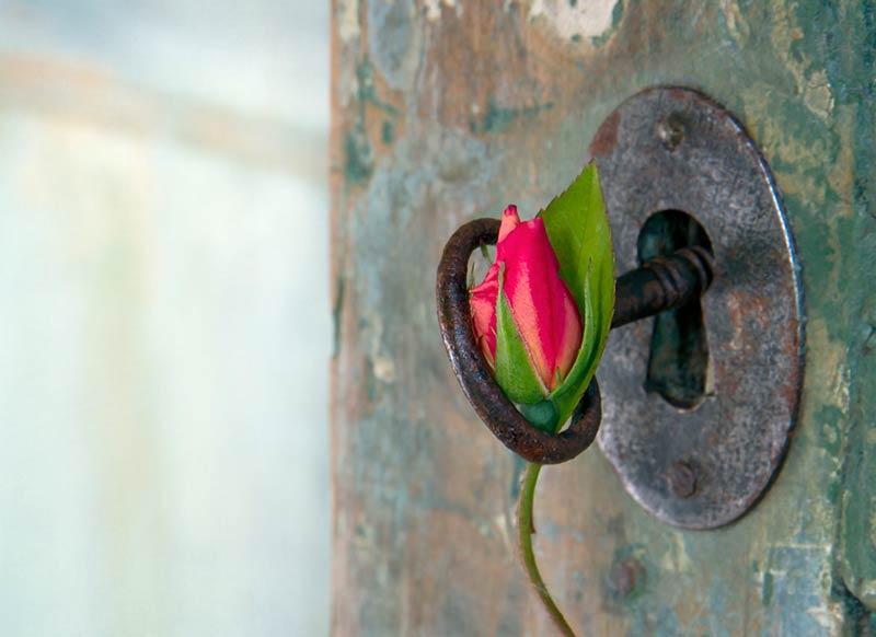Rote Rose hängt in Türschloss